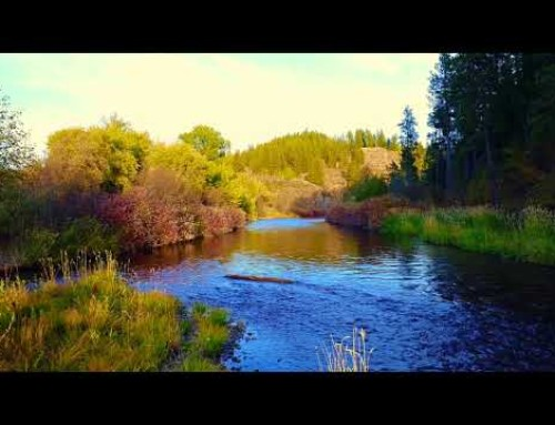 Three Rivers Ranch Fly Fishing Lodge in Idaho